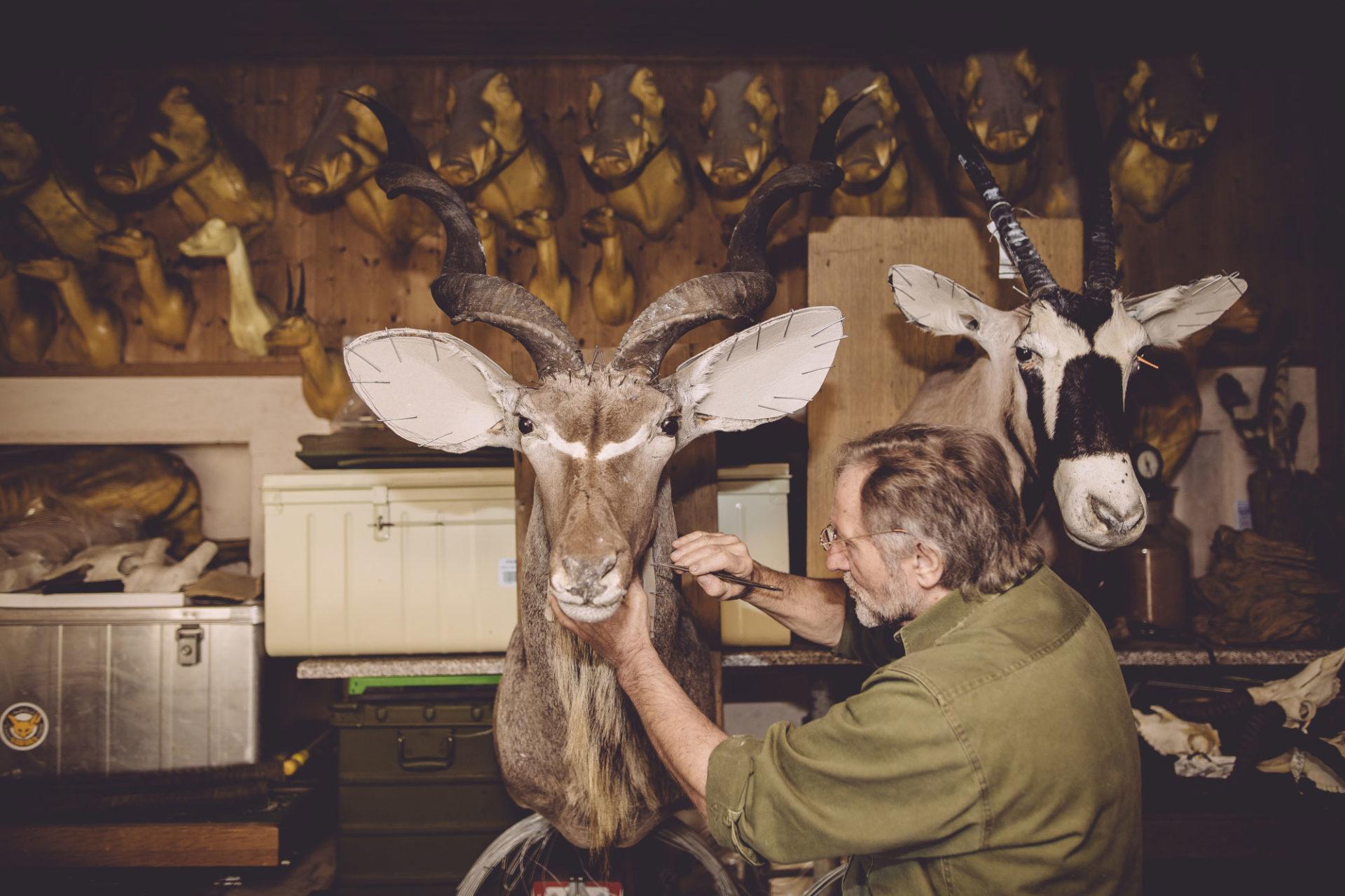 Safari Service